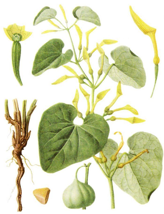 травы для снижения холестерина в крови сборы